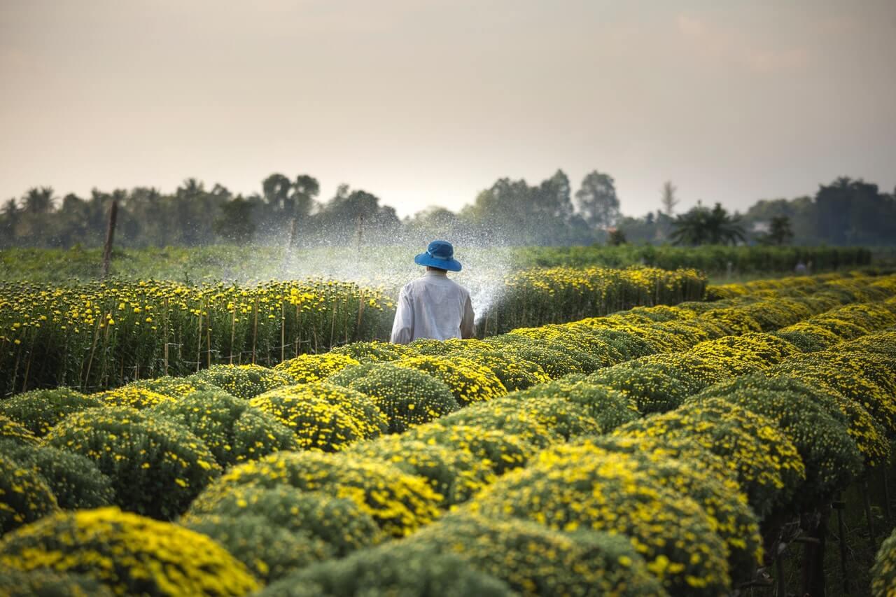 Ako často by sme mali rastliny zalievať