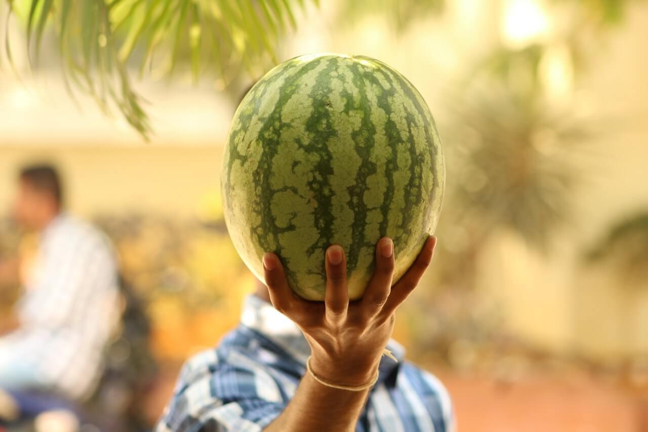 Ako vybrať sladký melón?