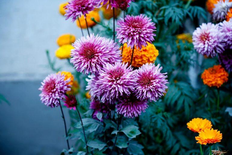 Ako si založiť kvetinový záhon?